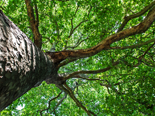 image of tree